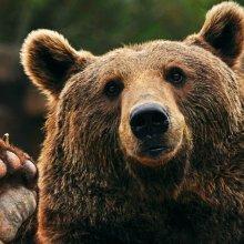 13 декабря - День Медведя!